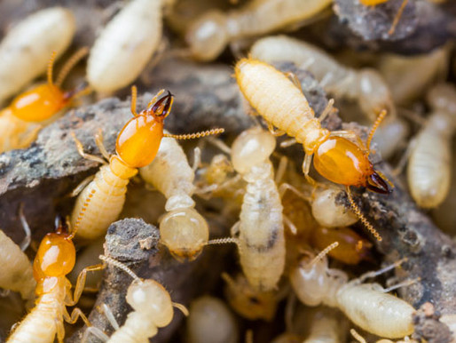 How to protect your home from Termite attack