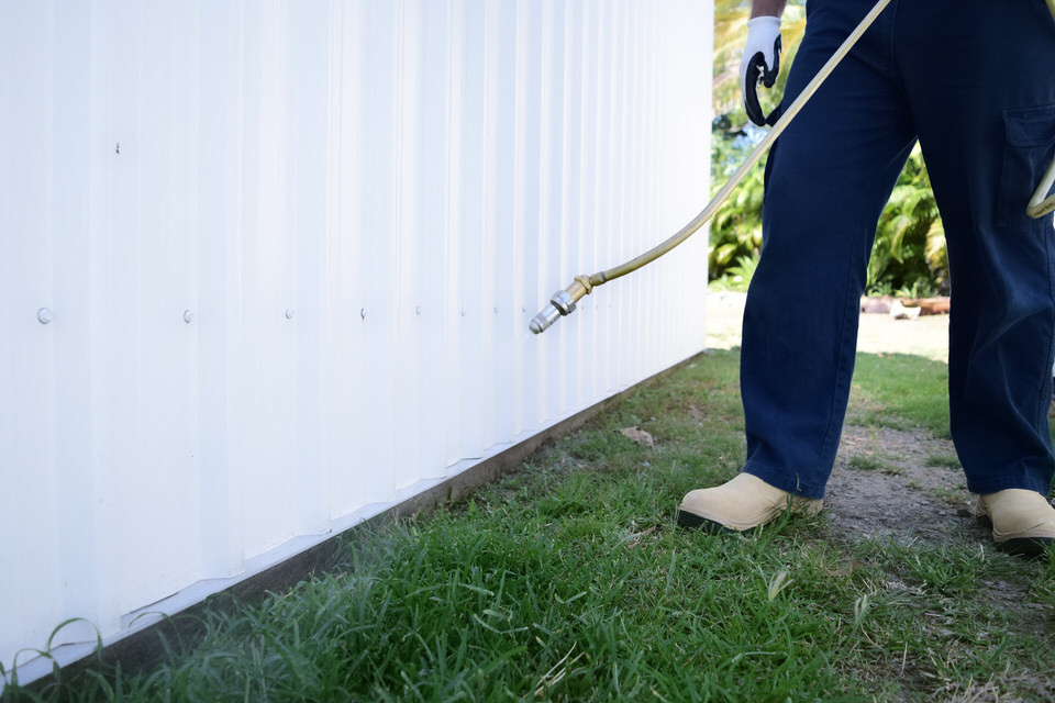 Ant pest control being carried out by All Things Pest Control Mackay