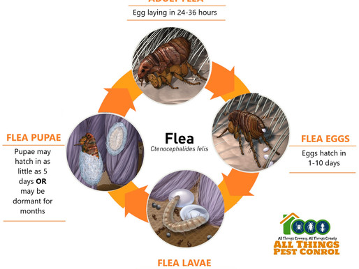 It's Flea Season!