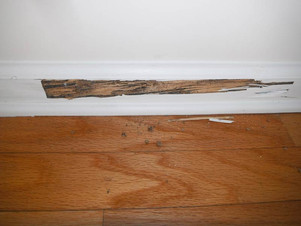 All Things Pest control mackay termite damaged skirting board