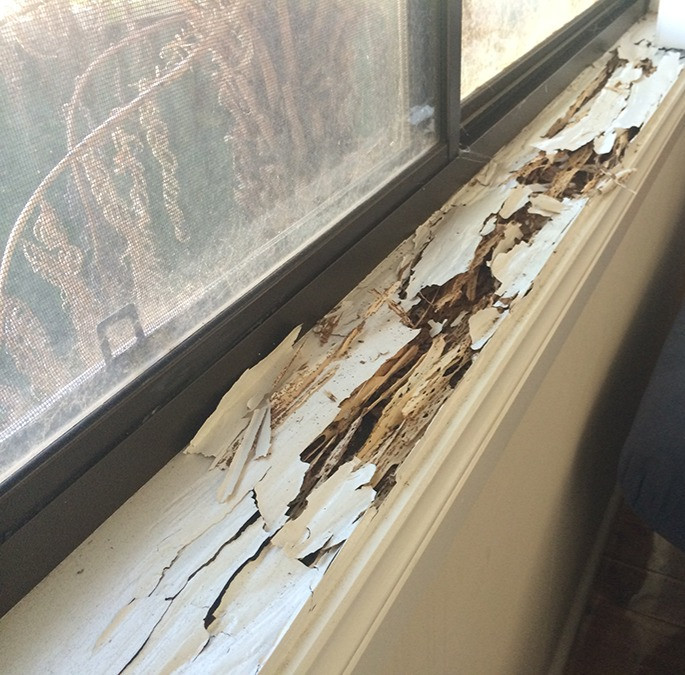 Termite damage to window sill frame in home