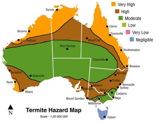 Mackay high risk for Termites