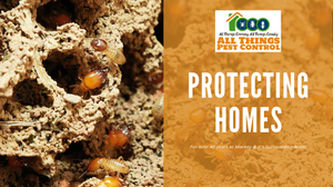All Things Pest Control protecting homes from termites