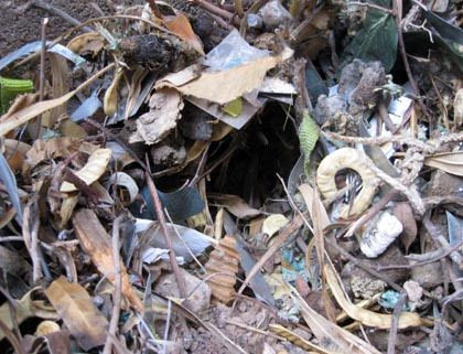 Roof Rat nesting material
