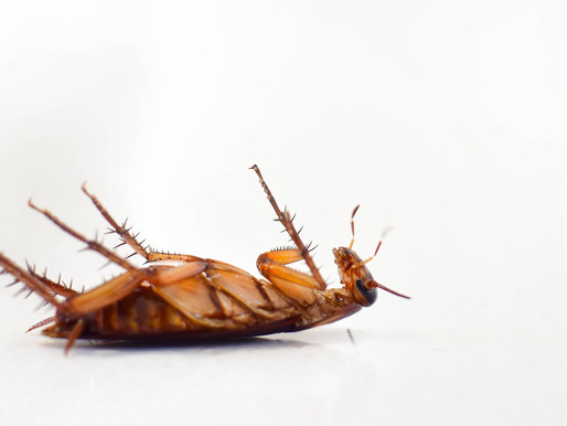 What To Expect After A Pest Control Treatment