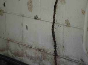 All Things Pest Control Makay Termite Mud Tube Up Wall