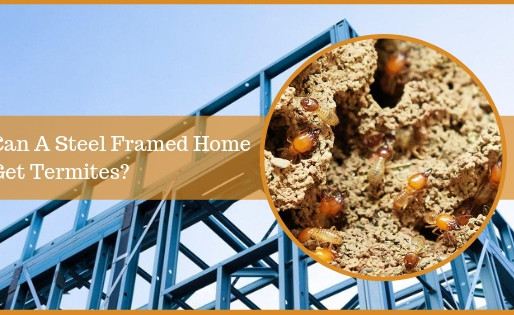 Can A Steel Framed Home Get Termites?