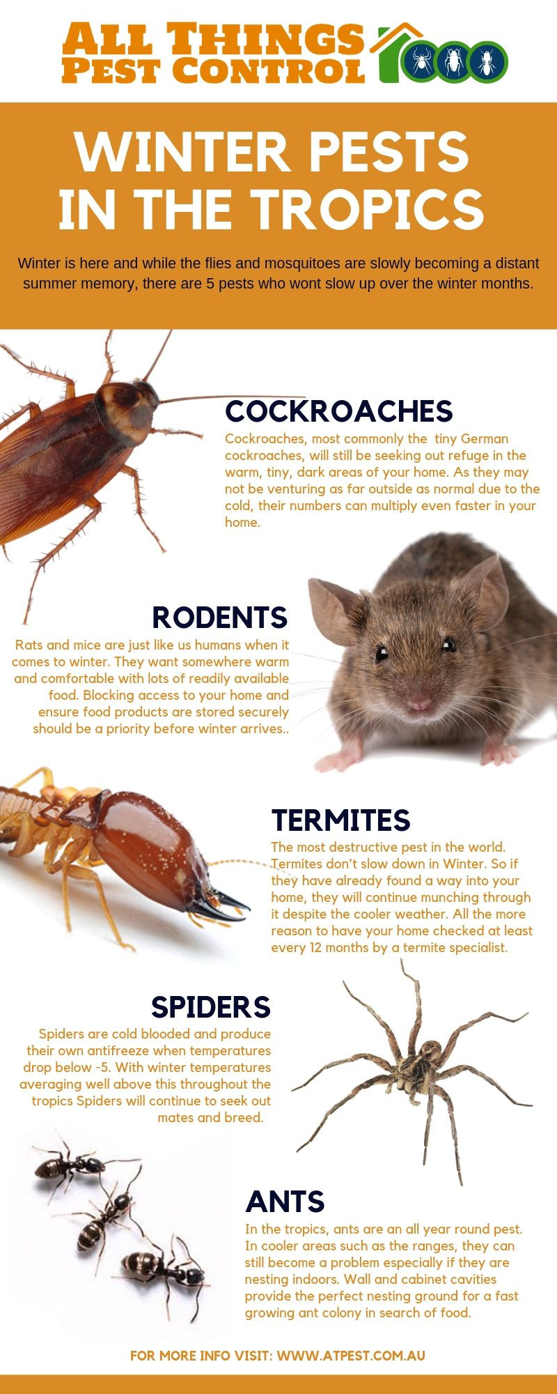 All Things Pest Control Mackay Winter Pests