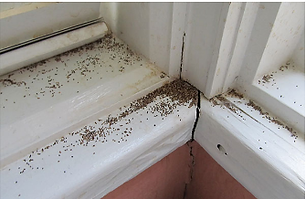 All-Things-Pest-Control-Mackay-Termite-D