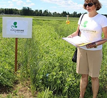 How to manage organic cultivation of field peas?