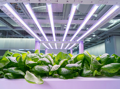 How to choose right light colors to grow healthy veggies?