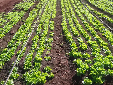 How to follow right steps to grow vegetables organically?