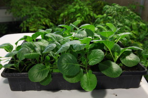 Tips and Tricks about Vermicompost in Horticulture