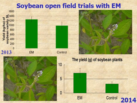Do You know another method how to increase the yield of soybeans?
