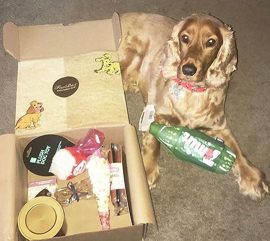 FuBox Cocker Spaniel