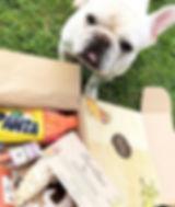 FurBox Bulldog