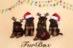 FurBox Christmas 08.jpg