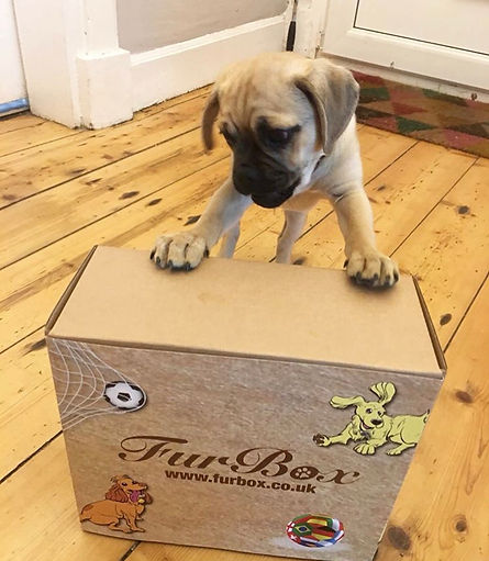 FurBox Puppy