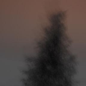 Black tree on pink, camera sway