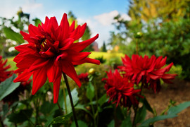 Rode bloem.jpg