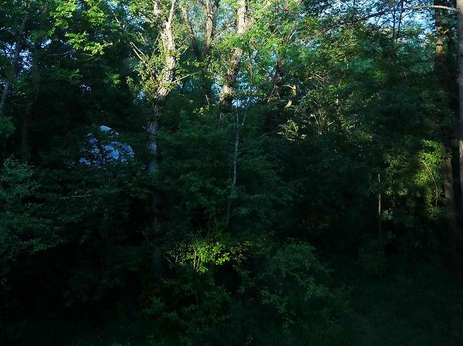arbres_edited.jpg