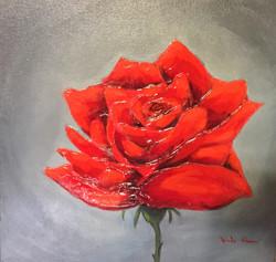 Une rose pour Rachelle