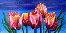 Tulipes pointent vers le ciel