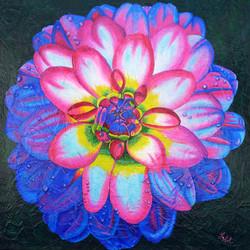 Dahlia multicolore