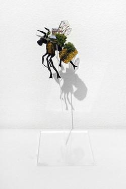 Mylyn Nguyen, 'Bombus + House' 2013