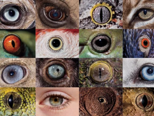 One world, multiple umwelts: Understanding sensation and perception across animal kingdom