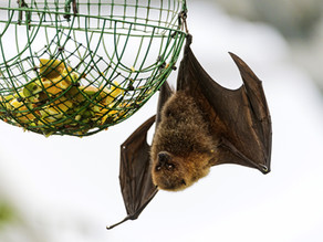 Rethinking bat damnation: Can we learn from them instead?