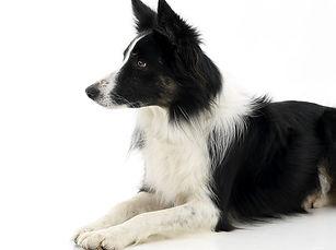chien fond blanc.jpg