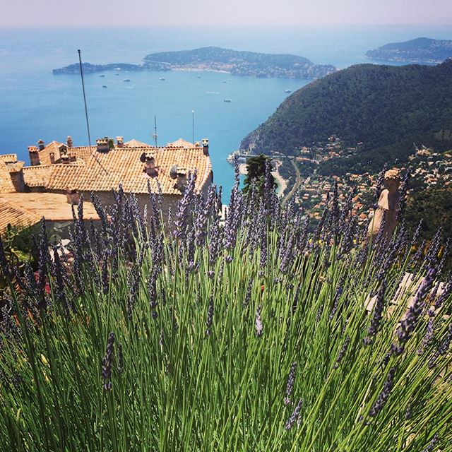 Lavender_ランベンダー__#France_#nice _#ezevillage _#cotedazur _#almaaoyama _#aroma_#organic _#beauty_ #min
