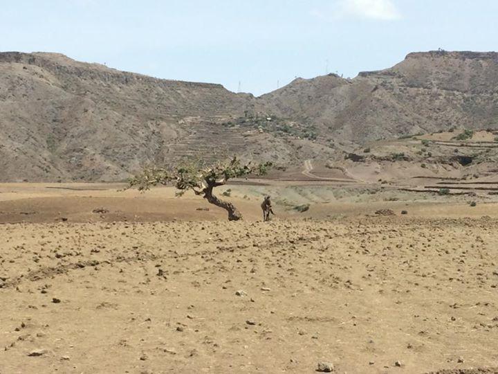探していた木は砂漠の中に