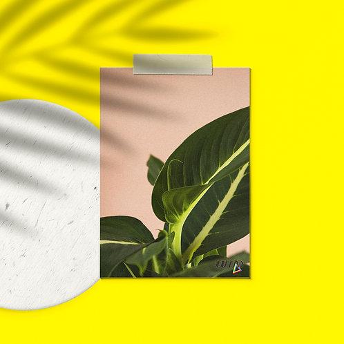 Postcard Plants to glow #4