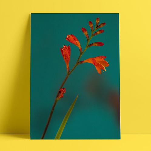 Plants to glow #1