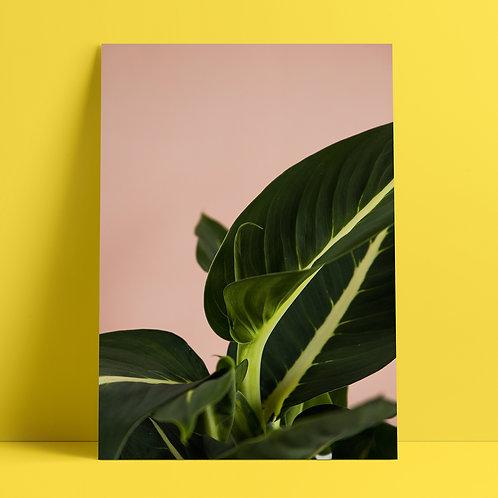 Plants to glow #4