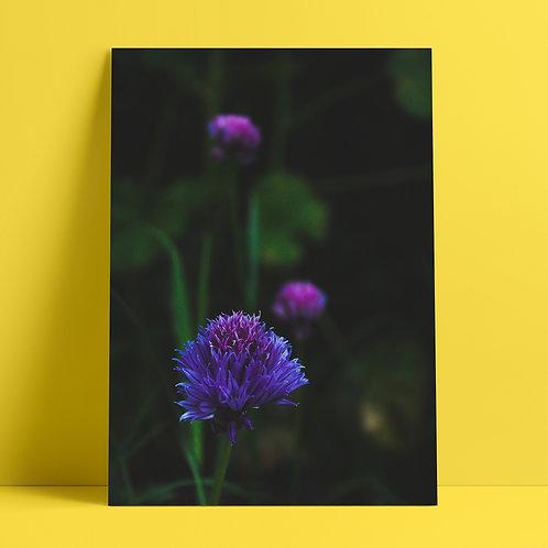 Garden Flowers #33