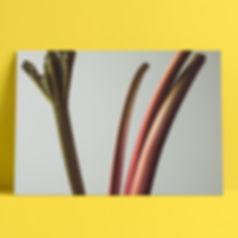 Rhubarb_#3_Product.jpg