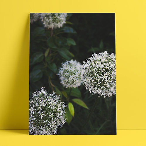 Garden Flowers #15