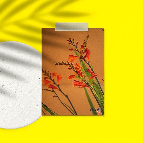Postcard Plants to glow #2