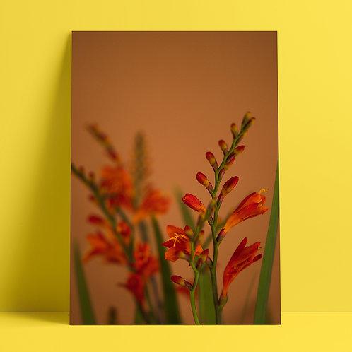 Plants to glow #3