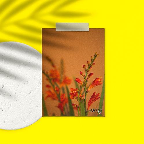 Postcard Plants to glow #3