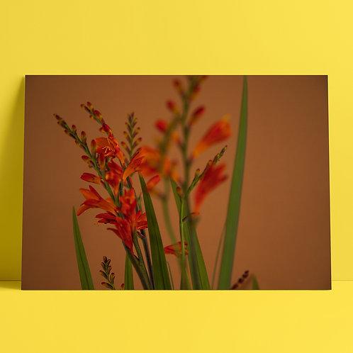 Plants to glow #6