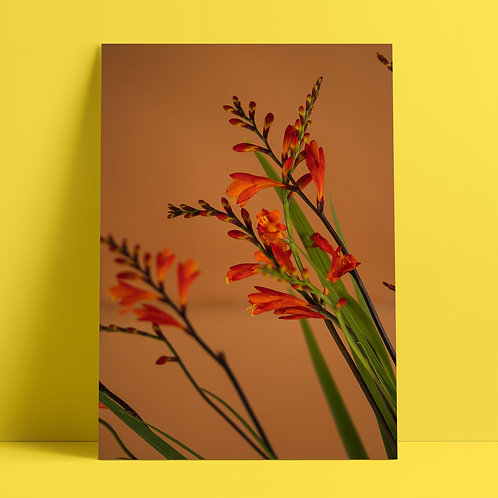 Plants to glow #2