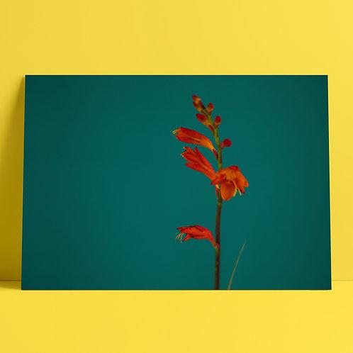 Plants to glow #5