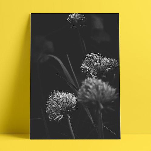 Garden Flowers #32