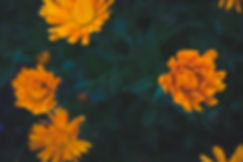 Garden_Flowers-10.jpg