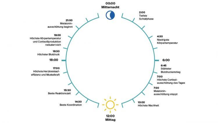 Der Biorhythmus eines Menschen. Die verschiedenen Schlafphasen und beste Uhrzeit zum ins Bett gehen