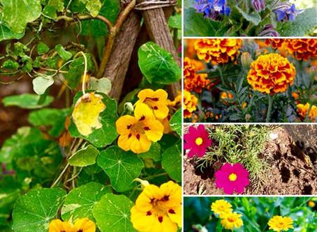 Du jardin à l'assiette @ La Plantade
